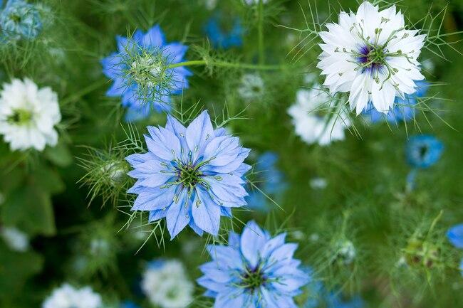 ۹ خاصیت گیاهی که شما را سالم نگه میدارد