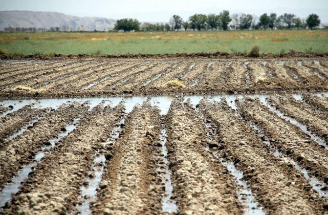 کشاورزان و باغداران استان مرکزی دفعات آبیاری را بیشتر کنند