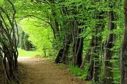 اجرای طرح جنگل کاری در ۱۲۲ هزار هکتار از سطح کشور