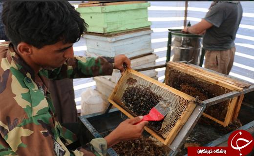 افزایش ٢٠ درصدی برداشت عسل در شهرستان خاتم +تصویر