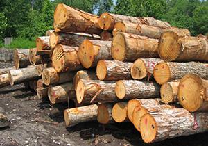 دستگیری یک گروه سه نفره قطع کننده درختان بلوط