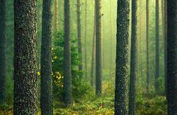 هیچ گونه مجوزی برای قطع درختان جنگلی صادر نشده