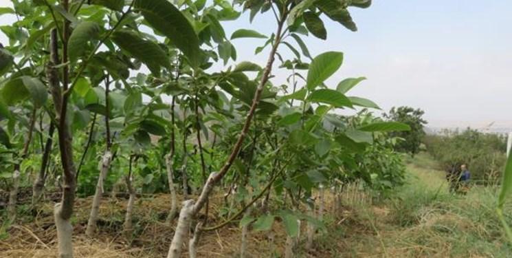 افتتاح باغ مادری در چناران
