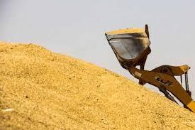 خرید ۲۴۲ هزار تن گندم از کشاورزان استان مرکزی