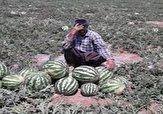 باشگاه خبرنگاران -گلایه کشاورزان «کرهای» از وضعیت فروش هندوانه در بازار + فیلم