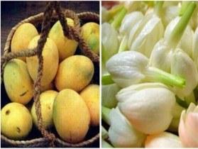 وحید مکی زاده: آغاز به کار جشنواره شکرگزاری انبه و یاسمین گل در میناب