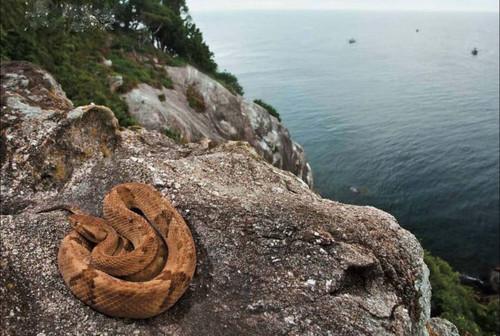 جزیره مارها؛ منطقهای ترسناک و ممنوعه برای گردشگران + تصاویر