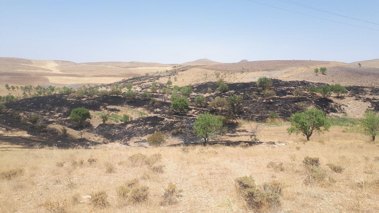 آتش سوزی در اراضی ارتگل فراهان