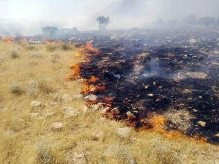 آتش تالاب هامون  مهارشد / عامل انسانی علت اصلی آتش سوزی