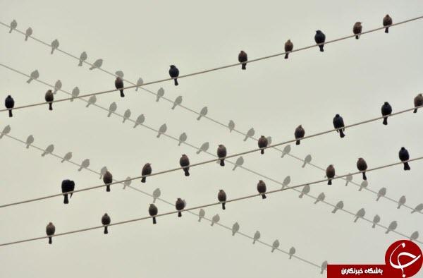 عکس منتخب نشنال جئوگرافیک از آواز گنجشکها