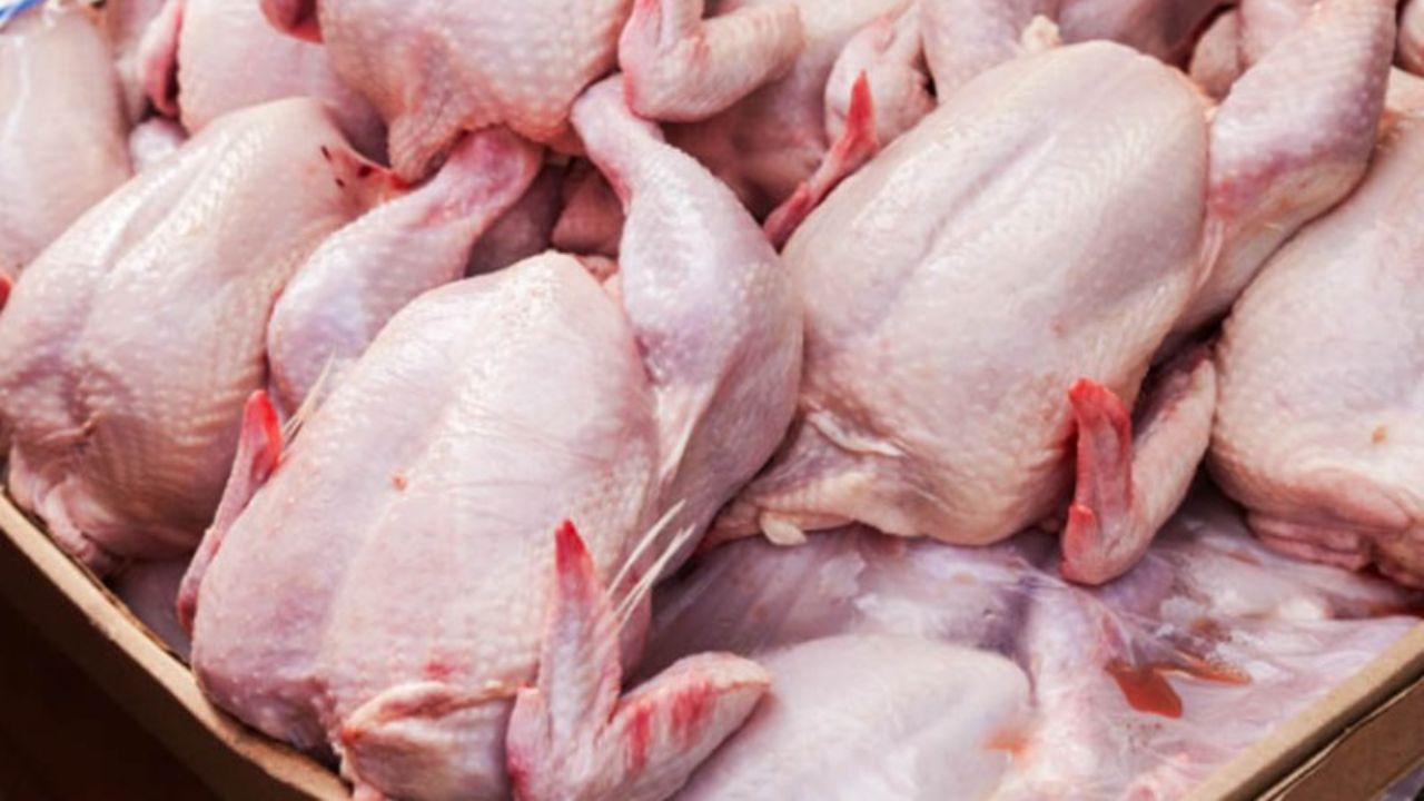 عمده دلایل ضعف عرضه مرغ در بازار / مرغ کیلویی ۱۵ هزار تومان شد