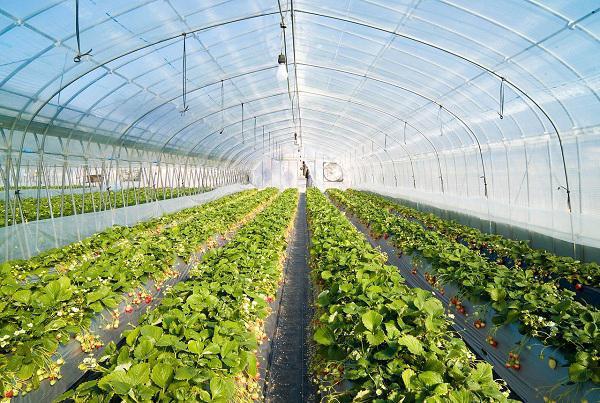 احداث بزرگترین شهرک گلخانهای در همدان