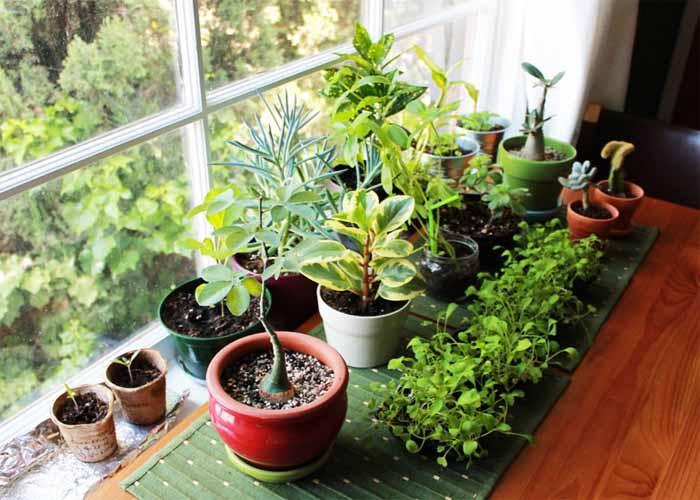 نکاتی درباره نگهداری گیاهان هنگامی که در مسافرت هستید