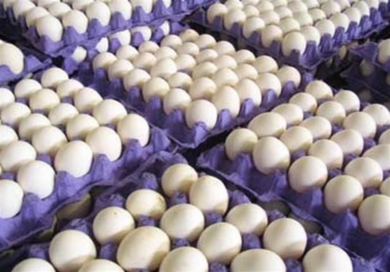 اختلاف یک هزار و ۳۰۰ تومانی تخم مرغ با قیمت مصوب/۱۰ درصد تولید روزانه تخم مرغ مازاد بر نیاز کشور است