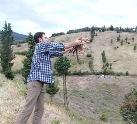 بازگشت پرنده شکاری سارگپه به دامان طبیعت