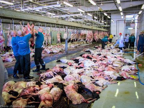 چرا گوشتهای قربانی حج به ایران برگردانده نشد؟