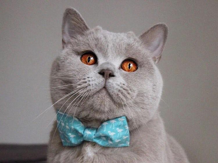 اثرات مخرب گوشی موبایل بر بدن/نیازهای غذایی اسب چیست؟/جانداری که قلبش در مغزش قرار دارد/اطلاعاتی درباره گربههای خانگی