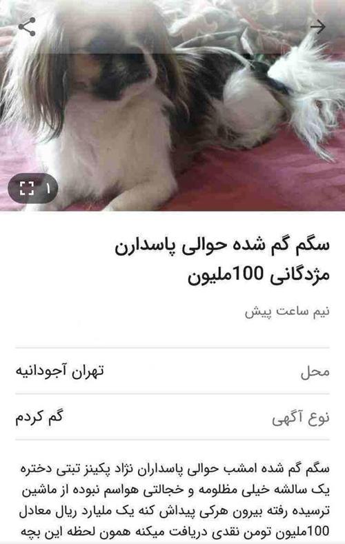 مژدگانی ۱۰۰میلیونی برای سگ گمشده! +عکس