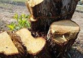 باشگاه خبرنگاران -قلع و قمع درختان در جنگلهای عباسآباد + فیلم