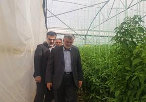بازدید وزیر جهادکشاورزی از گلخانه شهرستان پاسارگاد