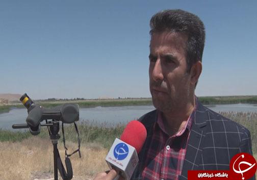 سفر بیش از ۵۰ هزار پرنده مهاجر به بهشت پرندگان ایران