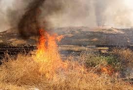 ۱۰ هکتار از پسماند مزارع کشاورزی و یک هکتار باغ انگور در شهرستان سیروان طعمه حریق شد