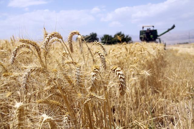 ایلام رتبه نخست تولید بذر در کشور