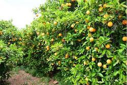 باشگاه خبرنگاران -۶٣ درصد افزایش در شاخص زراعت و باغداری در بهار ٩٨
