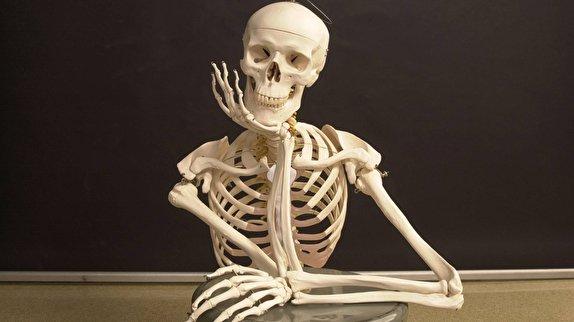 باشگاه خبرنگاران -اطلاعاتی که شاید درباره استخوان هایتان نیاز شود/ وزن اسکلت انسان چقدر است؟