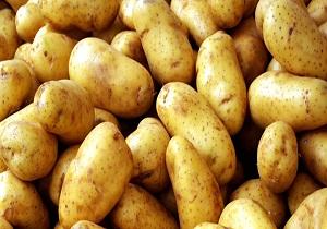 ایجاد ۴۰۰ هزار تن سردخانه فنی برای ذخیره سازی سیب زمینی در استان همدان