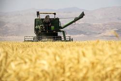 خرید بدون مجوز گندم توسط بخش خصوصی ممنوع است