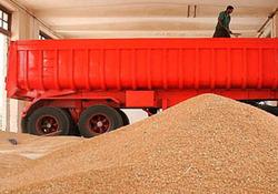 کشف ۷۰ تن گندم قاچاق در زنجان