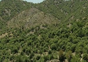 حفاظت از ۶ میلیون هکتار از جنگلهای زاگرس / برگزاری کارگروه آموزشی بوم سازگان جنگلهای زاگرس در همدان
