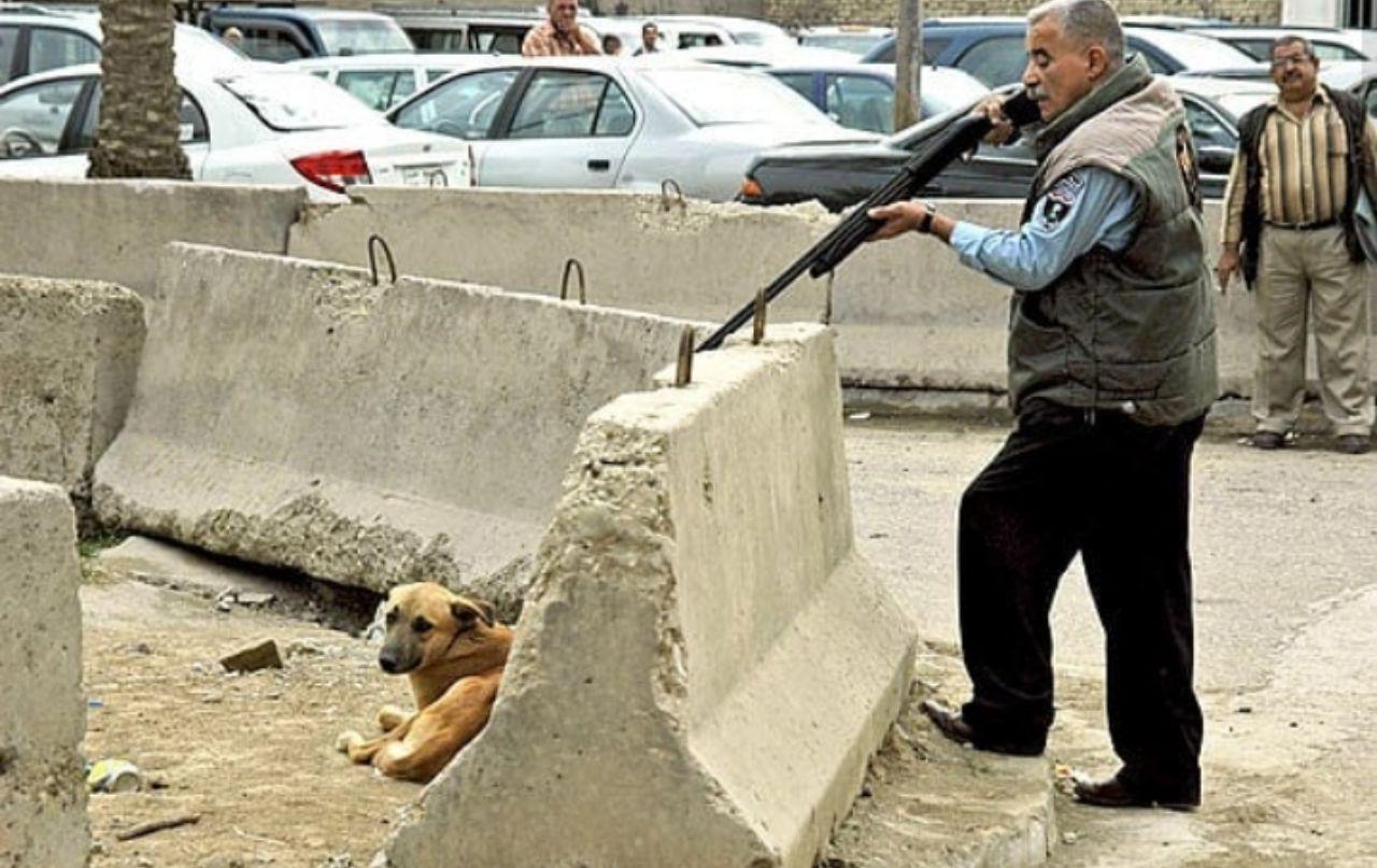ماجرای کشتار سگ ها در کهریزک چیست؟ + فیلم و عکس