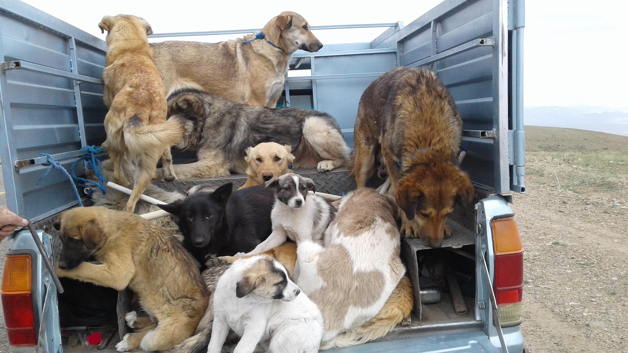 واکنش مدیریت شهری به انتشار فیلم سگ کشی