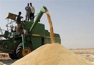 فعالیت ۵ مرکز خرید گندم در ملایر