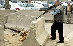 ماجرای کشتار سگها در کهریزک چیست؟ + فیلم و عکس