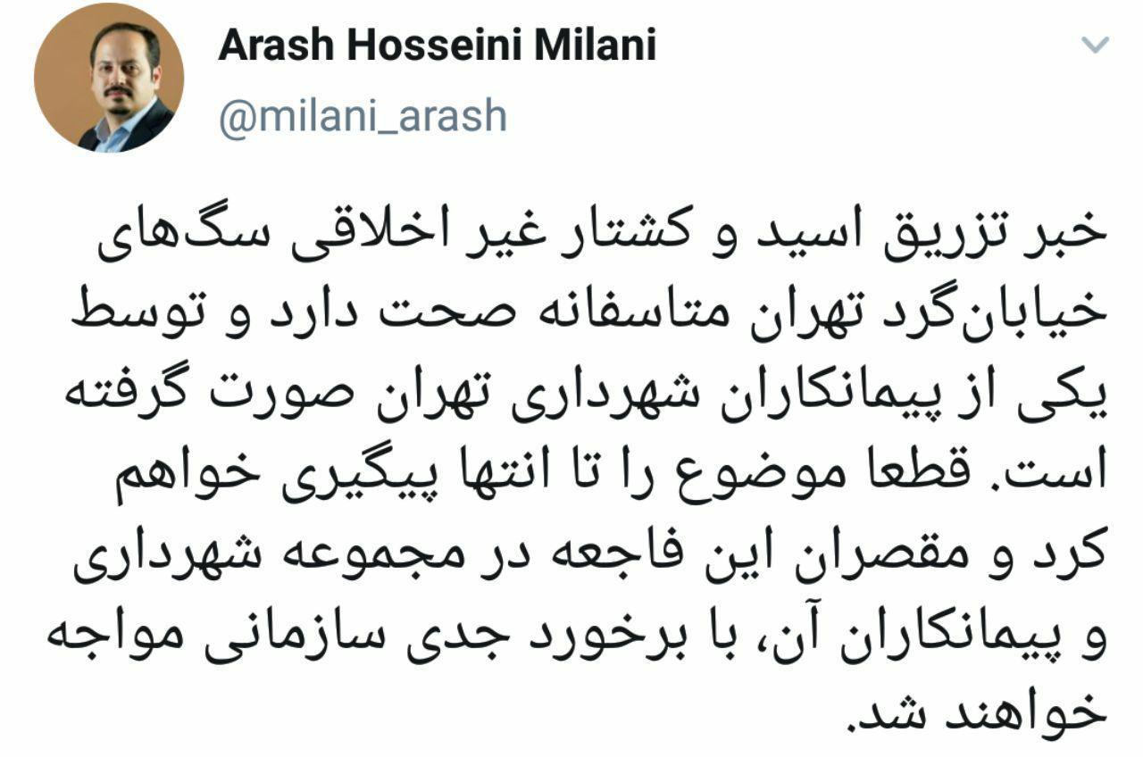 عضو شورای شهر تهران خبر از صحت ماجرای سگ کشی داد