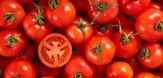 باشگاه خبرنگاران -سقوط ۱۰۰ درصدی قیمت گوجه فرنگی در بازار / لیموترش میناب ۷ تا ۱۳ هزار تومان