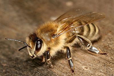 هجوم عجیب زنبورها به پرچم کرنر + فیلم