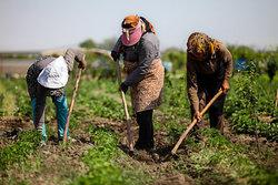 فعالیت ۲۵ صندوق اعتبارات خرد ویژه زنان روستایی در استان زنجان