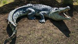 ورود تمساح به پایگاه نظامی آمریکا در فلوریدا!+ فیلم و تصاویر