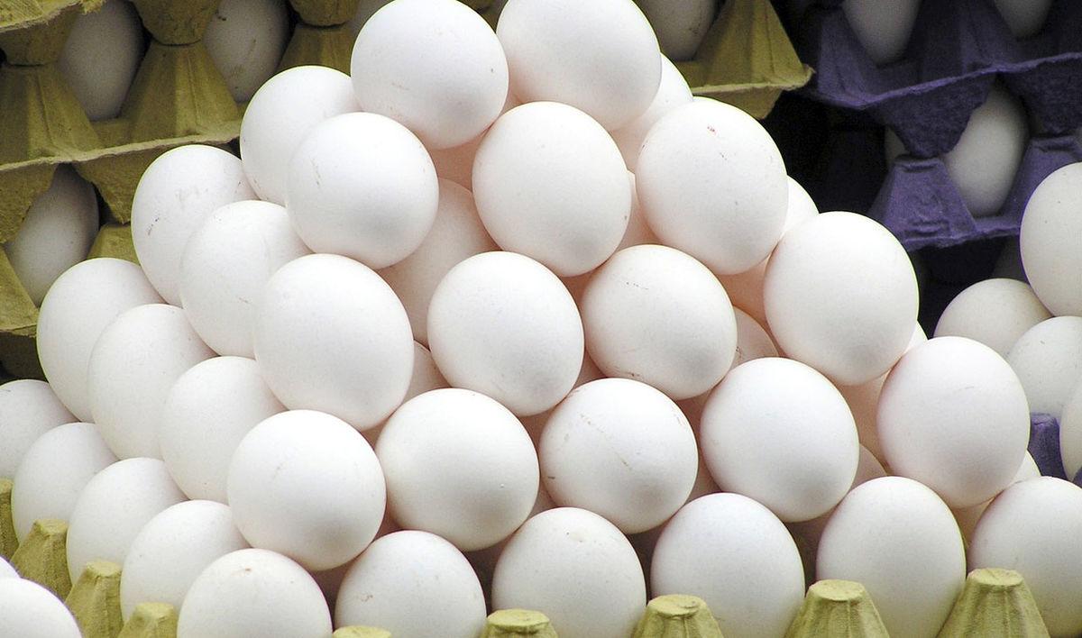 مازاد تولید تخم مرغ دردسر ساز شد/ قیمت هر کیلو تخم مرغ ۶ هزار و ۵۰۰ تومان