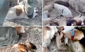 واکاوری ماجرای پرحاشیه سگکشی در تهران