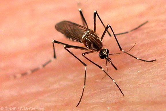 باشگاه خبرنگاران -چگونه از نیش پشهها در طول شب در امان بمانیم؟