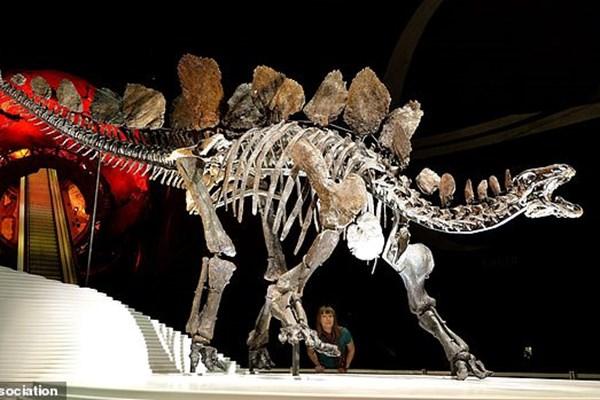 کشف گونه عجیب از  قدیمی ترین یک نوع دایناسور!+ عکس