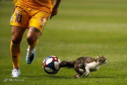 حیوانات جیمی جامپی
