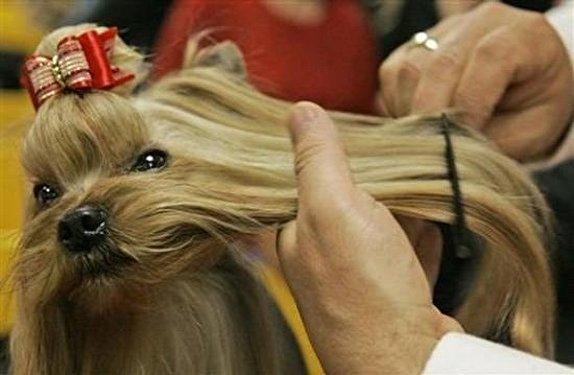 هزینههای نجومی برای آرایشگاه سگ و گربه/ زندگی لاکچری حیوانات خانگی بچهپولدارها