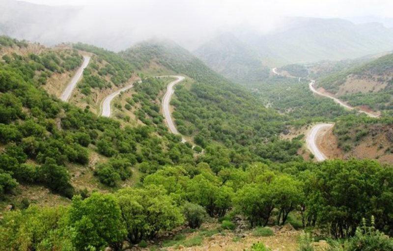 تبر قانون بیخ گلوی بلوط های کهن زاگرس / قطع صد ها درخت 500 ساله بلوط در کهگیلویه وبویر احمد