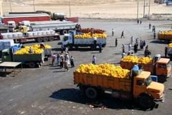 ارزآوری 250 میلیون دلاری صادرات محصولات کشاورزی